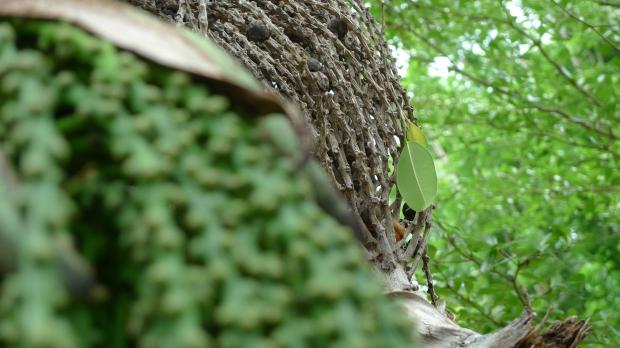 Elegy in green